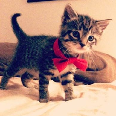 Kitty with Bow